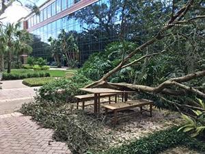 Harvey damage Tampa office.jpg